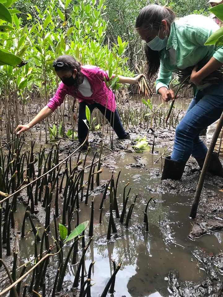 Guatemaltecos se unieron y sembraron mangle