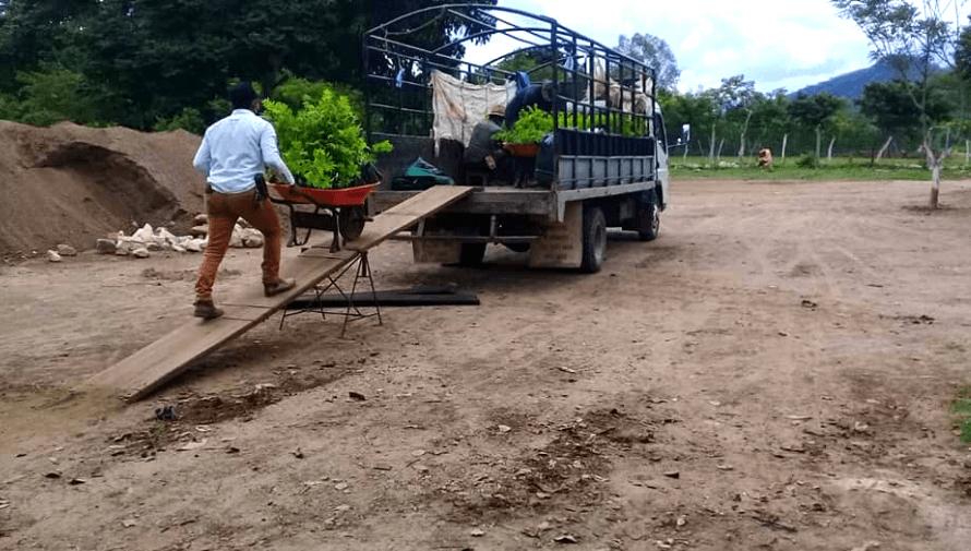 Guatemaltecos sembraron más de 6 mil árboles en bosques de Izabal