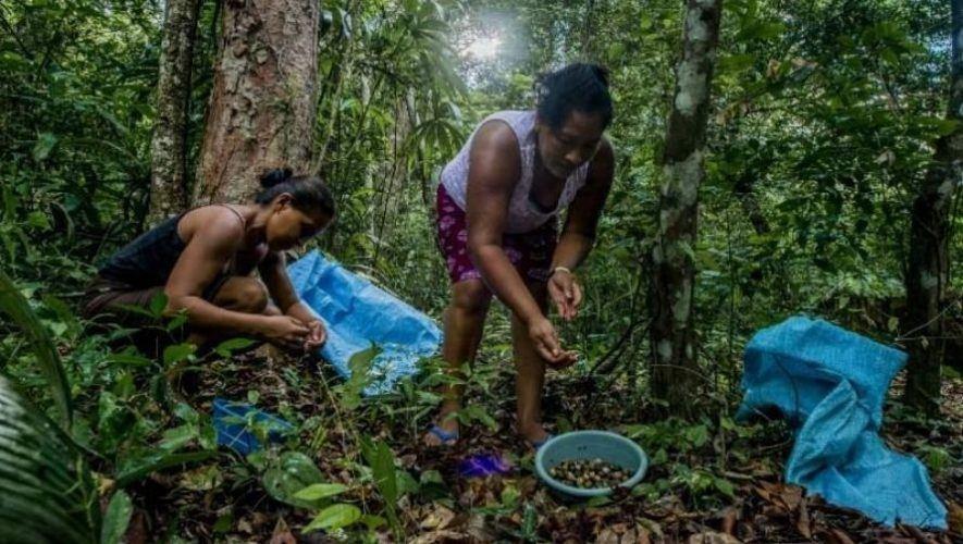 Mongabay Latam destacó a Guatemala por su conservación de la Reserva de la Biosfera Maya