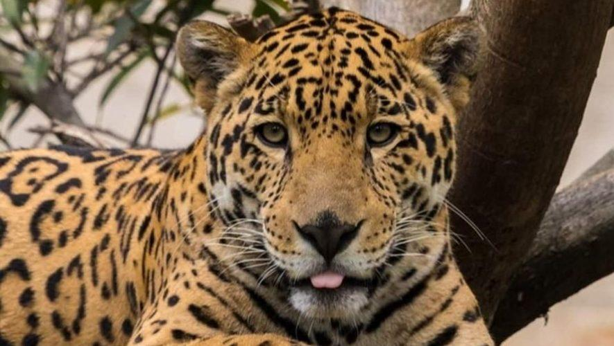 Nuevas membresías del Parque Zoológico Nacional La Aurora, 2020