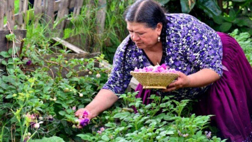 Taller en línea de plantas medicinales | Agosto 2020