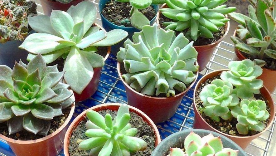 Taller en línea para aprender a cultivar suculentas | Agosto 2020