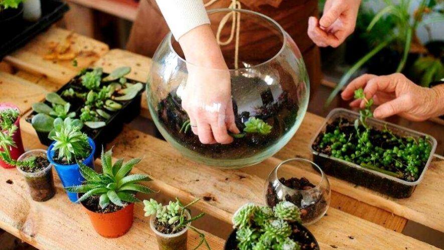 Taller virtual para aprender a elaborar terrarios con suculentas | Septiembre 2020