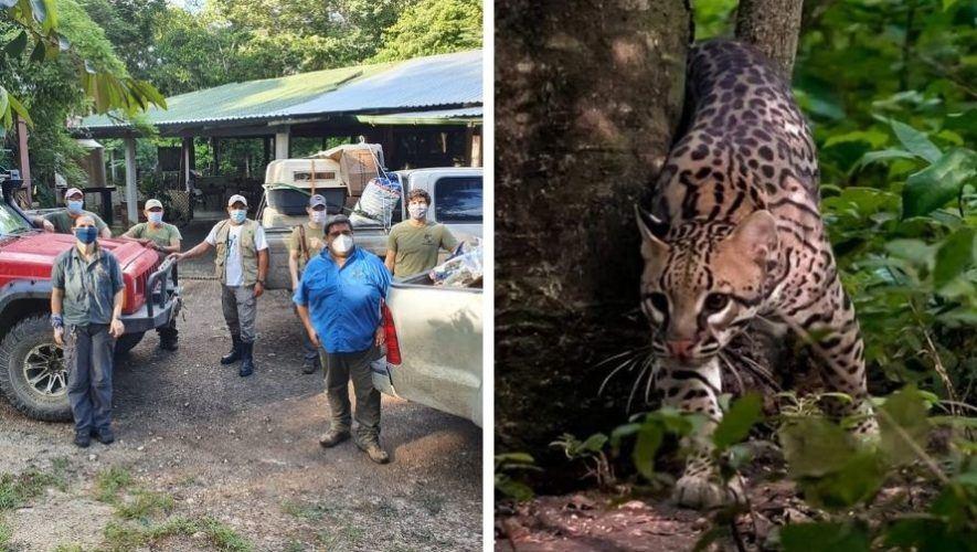conap-liberaron-animales-silvestres-parque-nacional-yaxha-peten