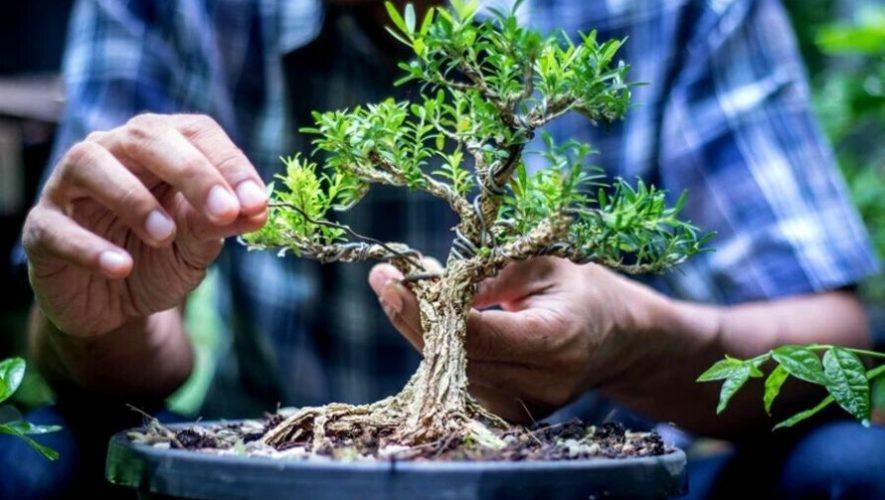 Charla gratuita para aprender a cultivar un bonsái en casa | Septiembre 2020