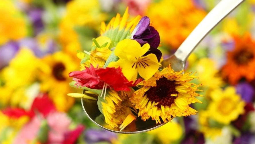 Talleres y concurso de flores comestibles, Festival de las Flores en Antigua Guatemala Noviembre 2020