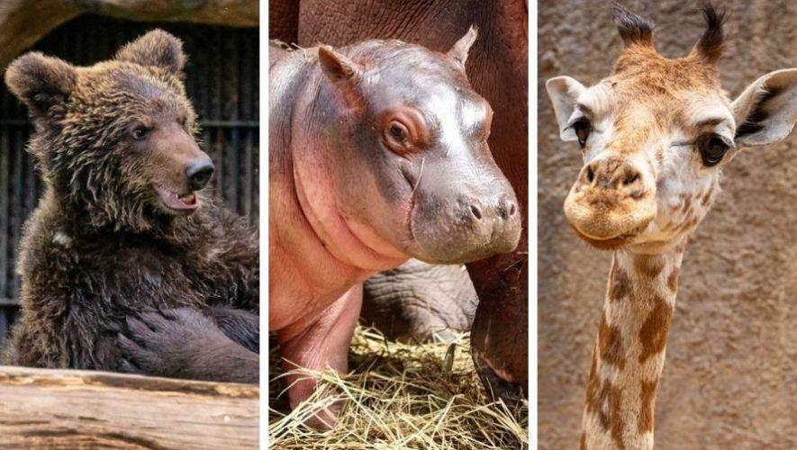 paquetes-apadrinamiento-adoptar-animal-zoologico-la-aurora-guatemala