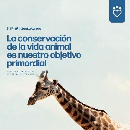 paquetes-apadrinamiento-adoptar-animal-zoologico-la-aurora-precios-costos-tarifario
