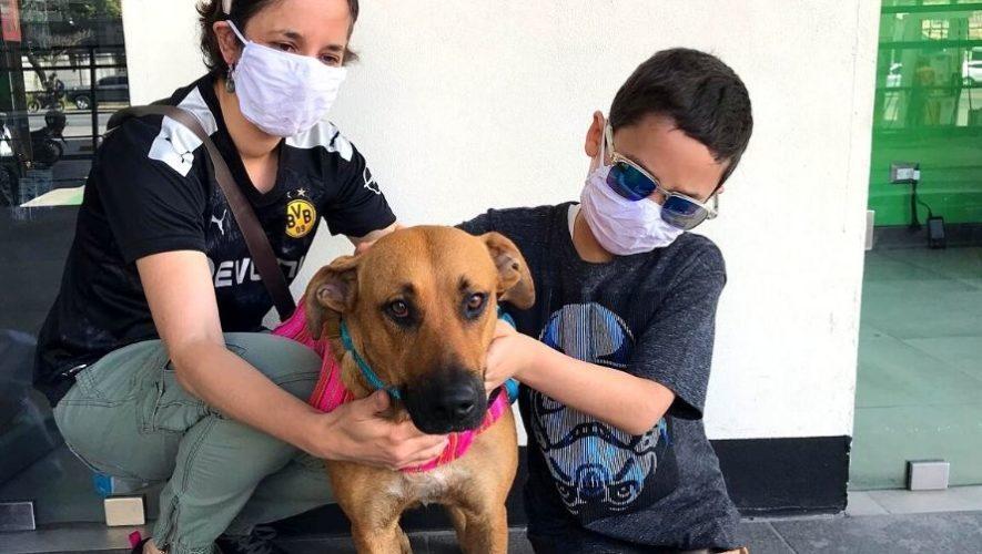 Feria de adopciones de perros y gatos de la Municipalidad de Guatemala   Octubre - Noviembre 2020