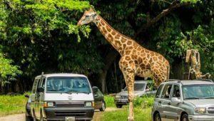 Rodada Safari, festival familiar en el Auto Safari Chapín   Octubre 2020