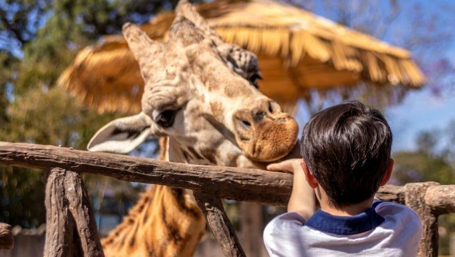 Tour virtual por el Zoológico La Aurora por el Día del Niño | Octubre 2020