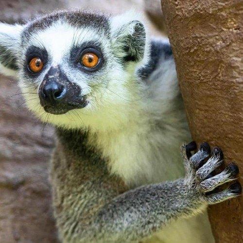 guatemaltecos-pueden-donar-mangueras-periodicos-zoologico-la-aurora-animales-instalaciones-ciudad-guatemala