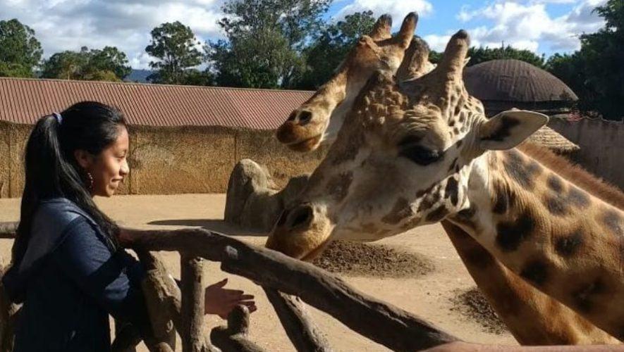 guatemaltecos-pueden-donar-mangueras-periodicos-zoologico-la-aurora-ciudad-guatemala