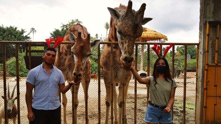 zoologico-la-aurora-ofrece-opciones-convivios-navidenos-ciudad-guatemala