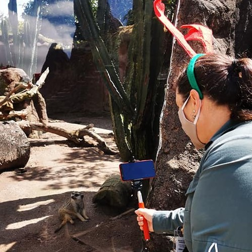 zoologico-la-aurora-ofrece-opciones-convivios-navidenos-ciudad-guatemala-recorridos-precios-paquetes