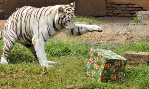 zoologico-la-aurora-ofrece-opciones-convivios-navidenos-ciudad-guatemala-santa-secreto-regalo-animales