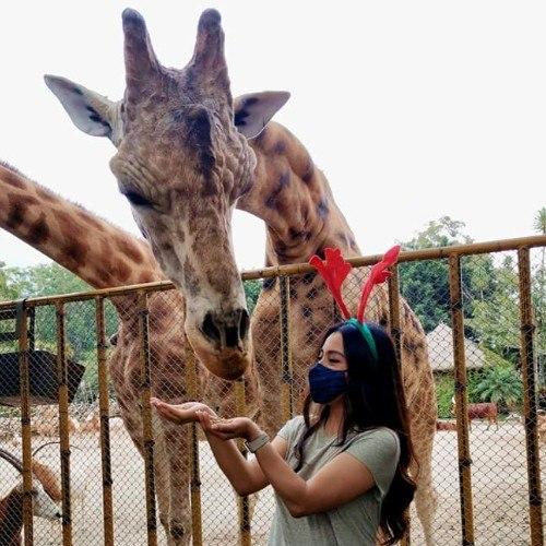 zoologico-la-aurora-ofrece-opciones-convivios-navidenos-ciudad-guatemala-tour-presencial-virtual