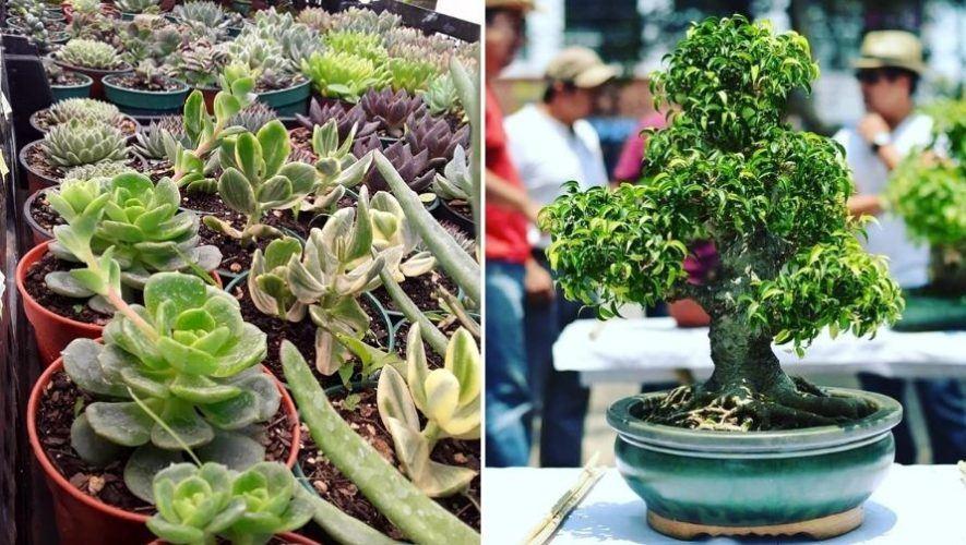 Bazar navideño de plantas exóticas en la Ciudad de Guatemala | Diciembre 2020