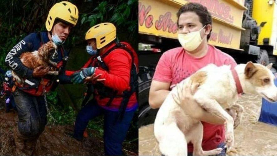 Centros de acopio donde los guatemaltecos pueden donar comida para las mascotas