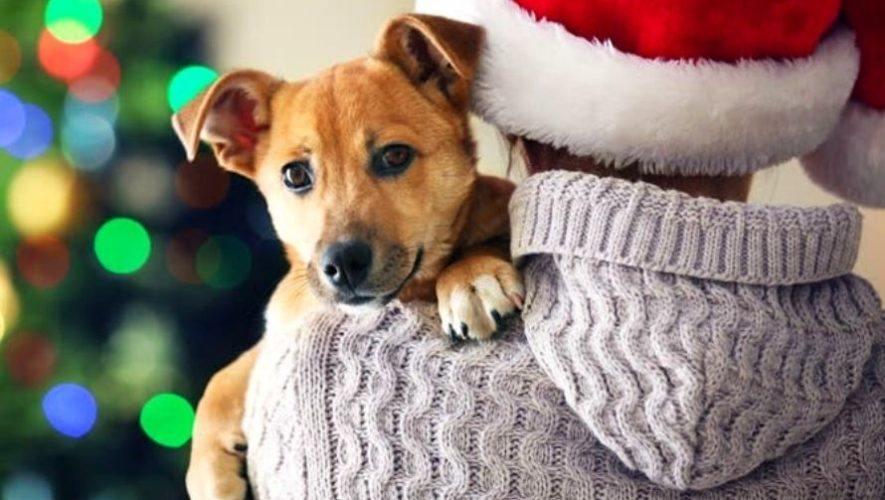 Feria navideña de adopciones de mascotas | Diciembre 2020