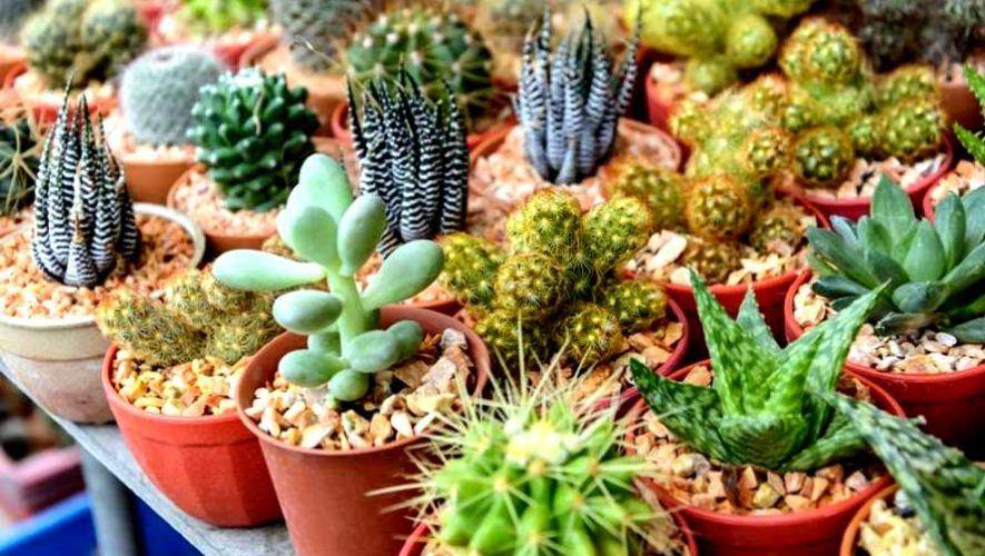 Festival de cactus y suculentas en Antigua Guatemala | Noviembre 2020