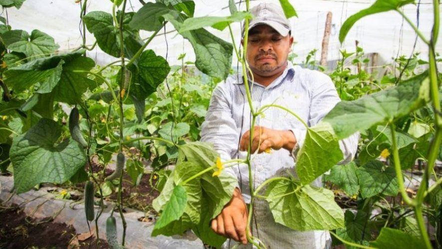 Juan José, el guatemalteco que al regresar a Guatemala creó un negocio a nivel internacional