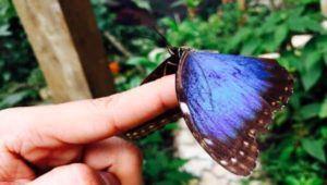 Taller sobre mariposas en un mariposario de Antigua Guatemala | Noviembre 2020