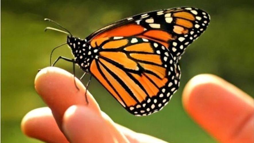 Taller virtual sobre la crianza de mariposas en casa | Noviembre 2020