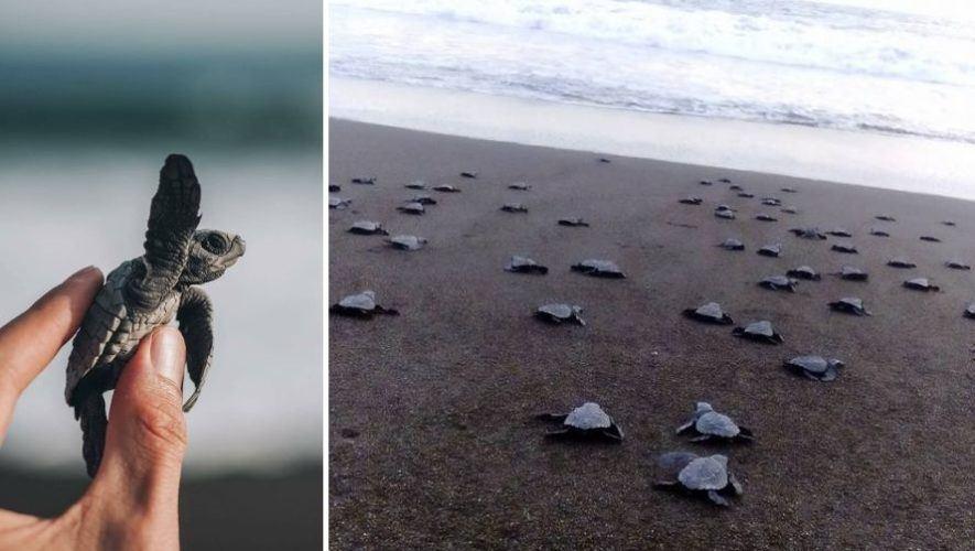 Viaje para liberar tortugas y limpiar playas | Diciembre 2020