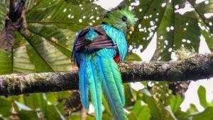 Viaje y tour para observar aves nativas de Guatemala | Noviembre 2020