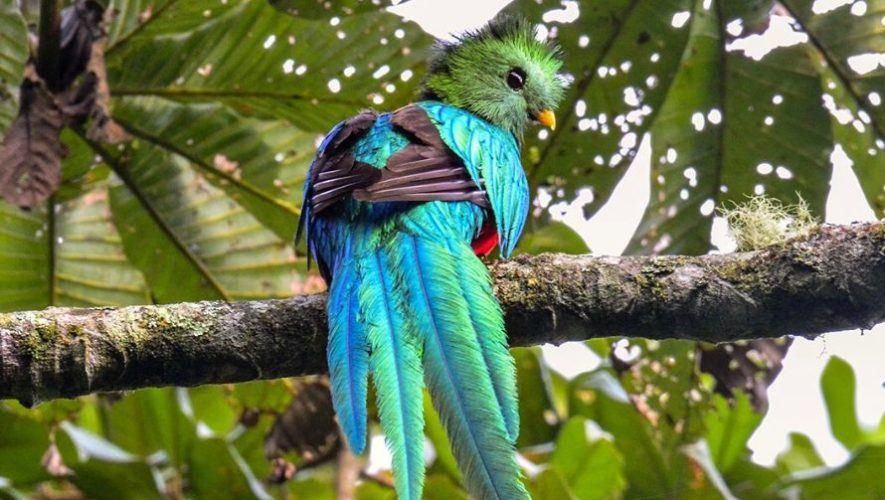 Viaje y tour para observar aves nativas de Guatemala   Noviembre 2020