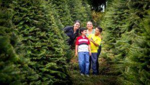 Visita a finca de pinabetes El Espinero, Tecpán | Noviembre - Diciembre 2020
