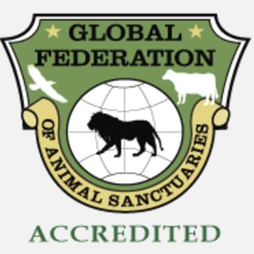 arcas-destacado-telemundo-hospital-salva-animales-silvestres-global-federation-animals-sanctuaries