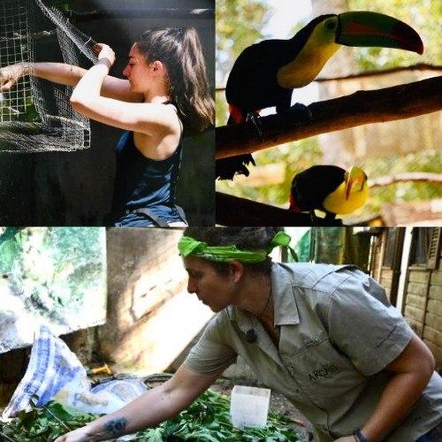 arcas-destacado-telemundo-hospital-salva-animales-silvestres-vida-guatemala-peten