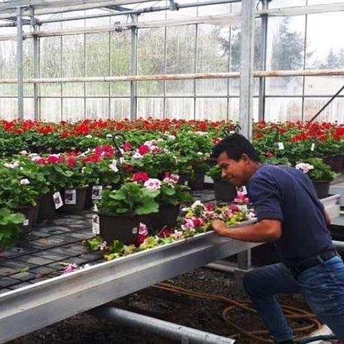 convocatoria-guatemaltecos-quieran-trabajar-canada-2020-programa-movilidad-laboral