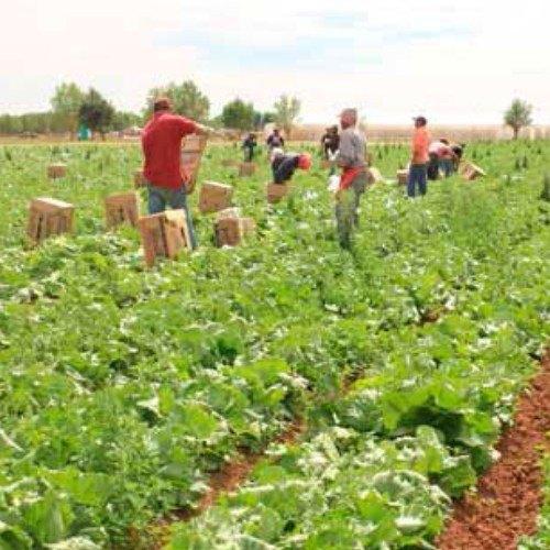 cursos-gratis-intecap-guatemala-2020-agricola