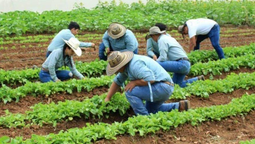 ddaso-proyecto-hecho-guatemaltecos-gano-concurso-internacional-actinspace-2020