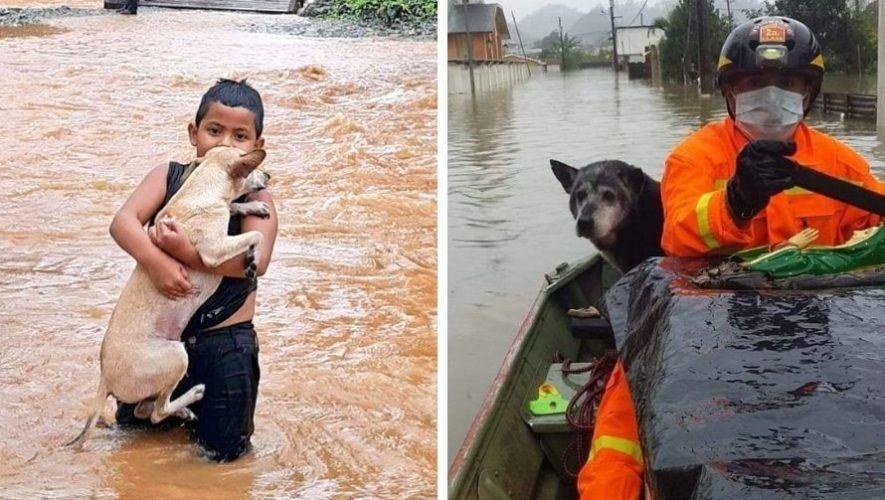 depresion-tropical-eta-guatemaltecos-rescatado-animales-inundaciones