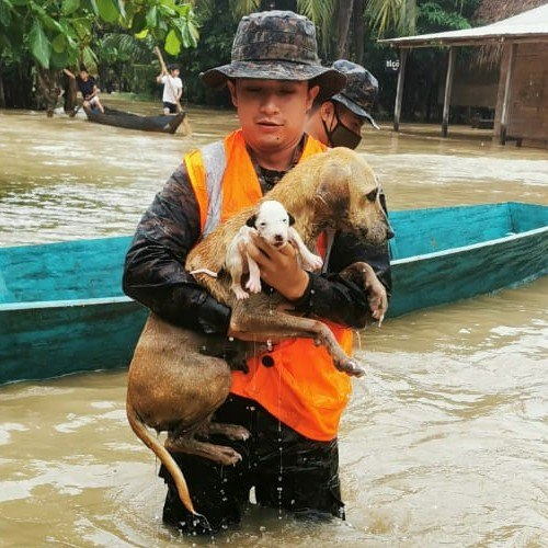 depresion-tropical-eta-guatemaltecos-rescatado-animales-inundaciones-brigada-especial-operaciones-selva-sayaxché-peten