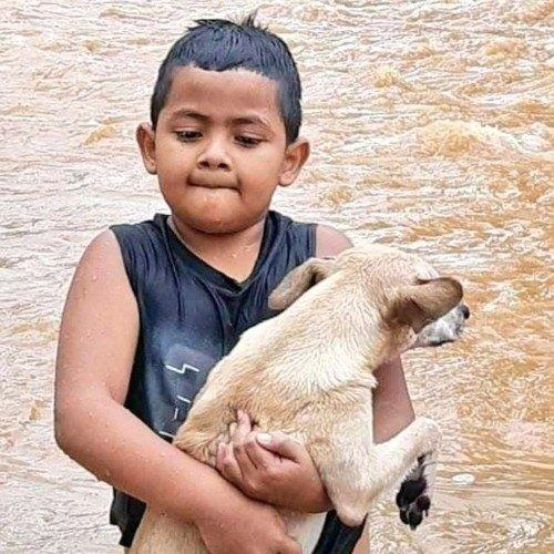 depresion-tropical-eta-guatemaltecos-rescatado-animales-inundaciones-niño-perrito-morales-izabal