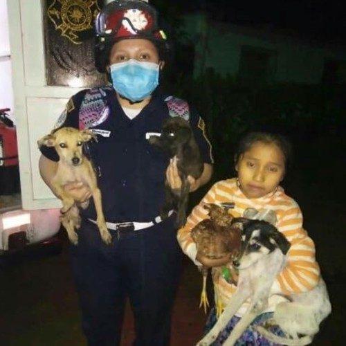 depresion-tropical-eta-guatemaltecos-rescatado-animales-inundaciones-tucuru-alta-verapaz