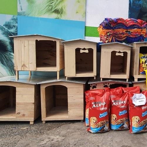 guatemalteca-hizo-donativo-mascotas-albergue-mixco-casas-hogares