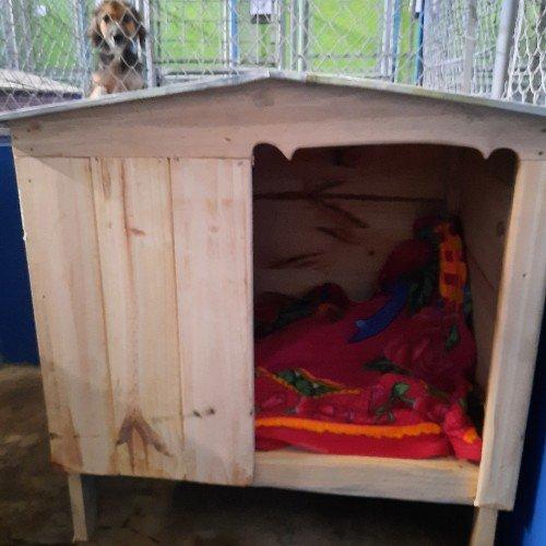 guatemalteca-hizo-donativo-mascotas-albergue-mixco-casitas-perritos-comida-concentrado-gatos