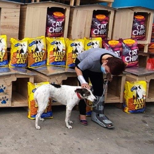 guatemalteca-hizo-donativo-mascotas-albergue-mixco-entrevista-emotiva-historia