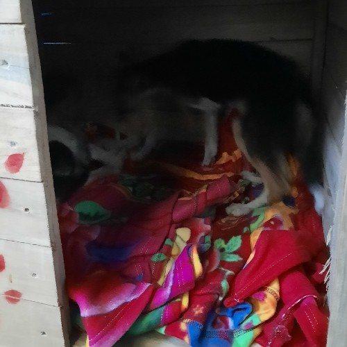 guatemalteca-hizo-donativo-mascotas-albergue-mixco-xiomara-aguirre
