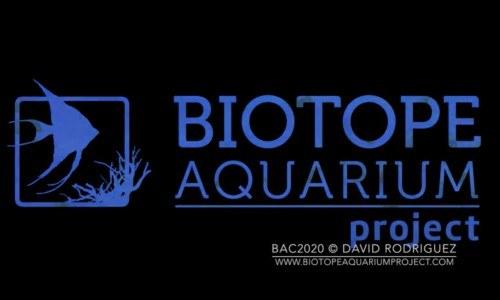 guatemalteco-obtuvo-segundo-lugar-concurso-mundial-acurismo-biotopos-acuaticos