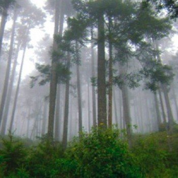 inab-prepara-hacer-segundo-inventario-forestal-nacional-guatemala-ifn-areas-departamentos