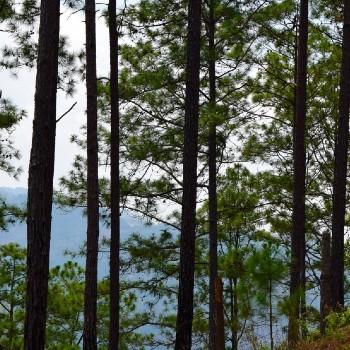 inab-prepara-hacer-segundo-inventario-forestal-nacional-guatemala-ifn-como-se-hara-metodologia-salud-bosques-arboles