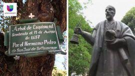 univision-publico-reportaje-arbol-hermano-pedro-antigua-guatemala