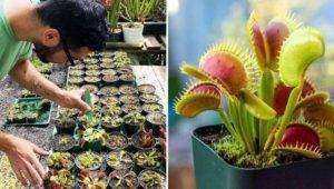 Festival de plantas carnívoras y exóticas en Antigua Guatemala | Diciembre 2020